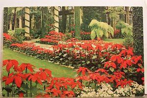 Pennsylvania PA Kennett Square Longwood Gardens Main Conservatory Postcard Old