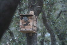 EASTERN SCREECH.OWL.HOUSE.Owl Nesting.Box.JUST RIGHT house BY.MYRON E.HOLLEY.JR