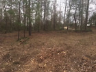 VACANT LAND FOR SALE! .23 ACRE POLK COUNTY, TEXAS! TREES! DIRECT ROAD! ON POWER!