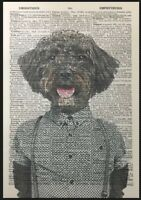 Schnoodle Print Vintage Dictionary Page Wall Art Picture Brown Dog In Clothes