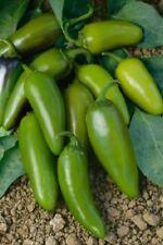 Mucho Nacho Jalapeno 25 Pepper Seeds Hybrid F1 Variety Hot Pepper
