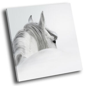 Square Animal Photo Canvas Small Wall Art Picture Prints White Horse Grey Black