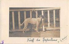 CPA 66 CARTE PHOTO CHENIL DES CAPEILLANS KIEFF DES CAPEILLANS LEVRIER DE RUSSIE