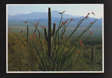 FLOWERS Cactus Ocotillo   CONTINENTAL postcard