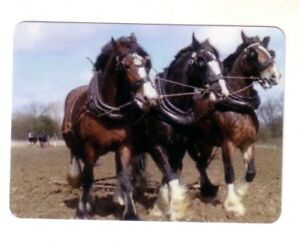Beautiful Draft Horses In Harness -- Modern Wide Linen Swap Playing Card