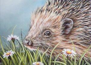 Hedgehog Greeting Card by Alison Armstrong- Blank/Birthday/Art - Wildlife/Animal