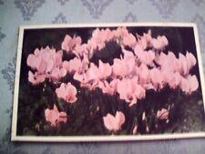 A31.Vintage Postcard. Pink Cyclamens.