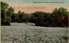 Buffalo Clover in Cameron Park Waco Texas TX Postcard B32