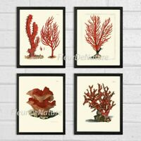 Unframed Red Coral Wall Art Print Set of 4 Antique Bathroom Bedroom Home Decor