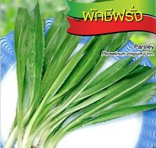 2800 Seeds parsley petroselinum crispum linn vegetable
