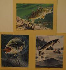 Rapala Set Musky Walleye Bass Prints
