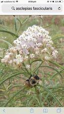 Asclepias Fascicularis-Slender Leaf milkweed-10 fresh seeds