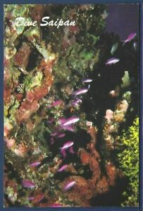 Dive Saipan Greetings Postcard, Reef Life