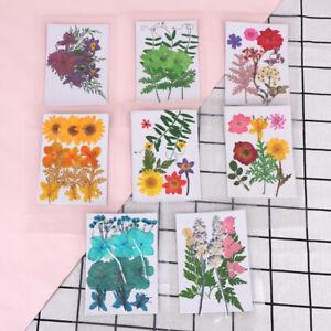 Pressed flower bag mixed organic natural dried flowers diy art floral decoRSYU