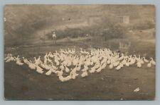 Goose Farm WILLIAMSPORT Pennsylvania RPPC Antique Poultry Photo 1907
