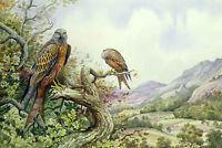 Beautiful Oil painting two birds hawks on branch in landscape hand painted art