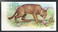 WILLS OTHER OVERSEAS-WILD ANIMALS OF THE WORLD- LYNX