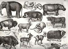 1875= GRANDI MAMMIFERI = Animali = Antica Stampa = Old ENGRAVING