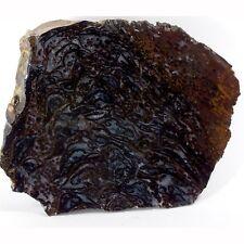 Fossil Fern Australian Palaeosmunda williamsi Queensland (EA7525) plant gem