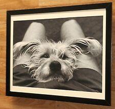 Bonnie & Me, Kent Reno poster, b&w dog wall art  -20x16'', cute dog print