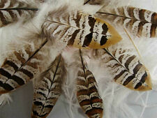 10 Small Natural Reeves Pheasant Wing Feathers - US Seller