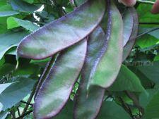 Vegetable Seed - Brow bean 6seeds Garden yard Patio Plants