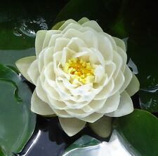 Bareroot Water Lily, Gonnere - Pure white with lots of petals - pond water plant