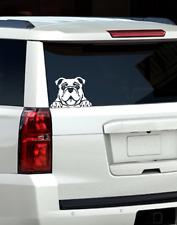 Bulldog Peeking Window Decal