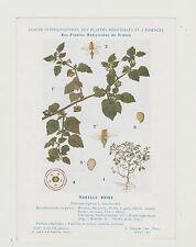FICHE N°40 PLANTE MEDICINALE/COMITE INTERMINISTERIEL-/Ed. AUZOUX/MORELLE NOIRE