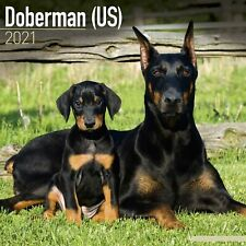 Doberman (Us) Calendar 2021 Premium Dog Breed Calendars