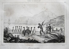Pingüinos en los Kerguelen archipiélago manchots Penguin Océano Índico Antártida