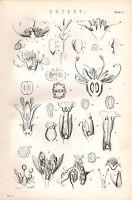1880 Aufdruck ~Botanik~Blumen~ Samen Blütenblätter Blätter Etc