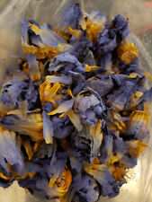 Premium Blue Lotus Dried Whole Flower (Nymphaea caerulea) Fresh, 1 oz Blue Lily