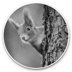 2 x Vinyl Stickers 20cm (bw) - Little Red Squirrel Woods Forrest  #37802