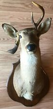Unique Vintage Deer Head Mount With Natural Horn Deformity Rare 1990 Non Typical
