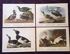 1942 Vintage AUDUBON LOT #1 of 4 DUCKS INSTANT DECOR Color Art Lithographs