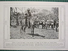 1915 WWI WW1 PRINT ~ PONY DISGUISED AS A ZEBRA GERMAN EAST AFRICAN BORDER