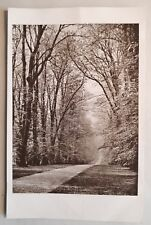 c1910 B/W Postcard. Avenue of Trees leading to COBHAM HALL, Kent. Arboreal View