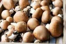 MUSHROOM SPAWN/SEEDS-button mushrooms/BROWN-BUTTON