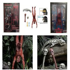 PREDATOR ACCESSORY PACK Skinned Body SKULLS NECA 2016 Deluxe Xenomorph Skull