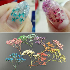 Colorful 3D Nail Art Decoration Dried Babysbreath Pretty Preserved Flower Design