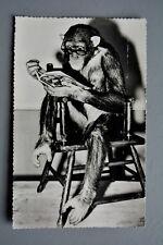 R&L Postcard: London Zoo Chimp Chimpanzee Reading Boox/Magazine in Glasses