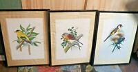 3 Framed Lithographs of Birds Donald Art Co