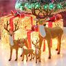 Fj- Am _ Eg _ Renna di Natale Cervo Finestra Negozio Esibizione Festa