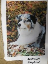Blue Merle Australian Shepherd Dog Breed, Working dog, Every day House Flag