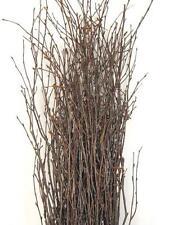 Richland Natural Birch Branches 3-4ft (25 branches) Floral Arrangements Bouquet