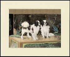JAPANESE CHIN TWO LITTLE DOGS CHARMING DOG PRINT MOUNTED READY TO FRAME