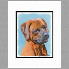 Tosa Inu Japanese Mastiff Original Print 8x10 Matted to 11x14