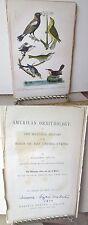 Vintage Print,RICE BUNTING,Birds of US,1879,Lizars