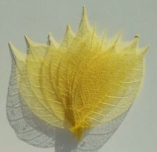 "#  10 Yellow Skeleton Rubber Tree Leaves 3.0"" by Sanook Paper Company"